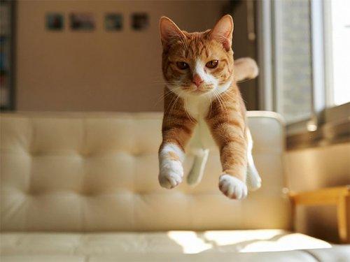 Летающие кошки (18 фото)