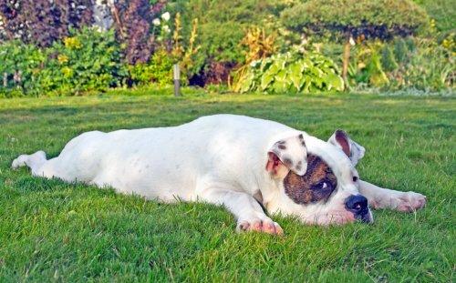 Топ-10: Самые недооценённые породы собак