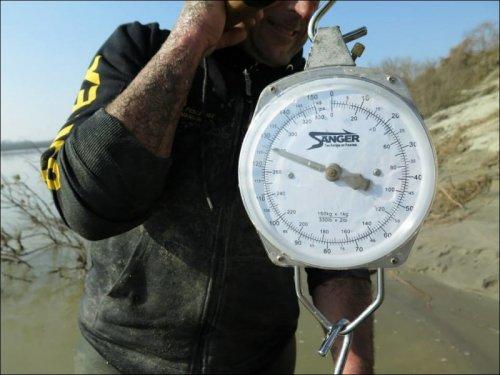 Итальянские рыбаки выловили 127-килограммового сома (5 фото)