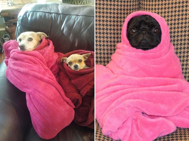 Связали и завернули в одеяло