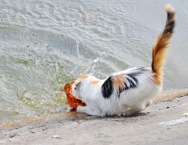 голодная рыба видео