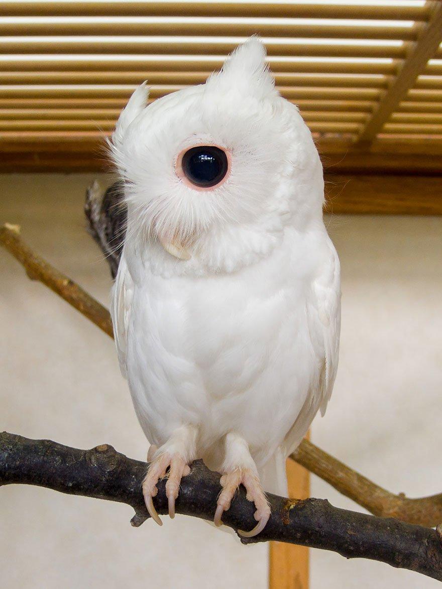 понравилось фото животных альбиносов образ для