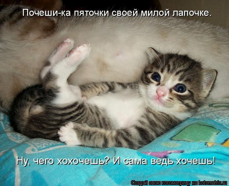 Смешные надписи на картинках котят