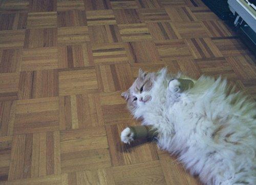Кошки с разными предметами на своих лапках (10 фото)