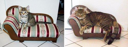 """Кошки в серии фотографий """"тогда и сейчас"""" (34 фото)"""