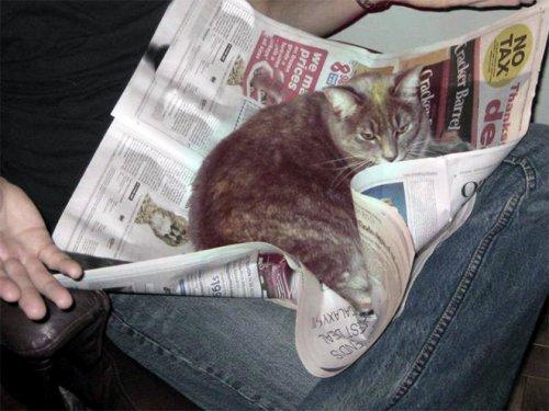 Домашние питомцы, которые мешают читать (19 фото)