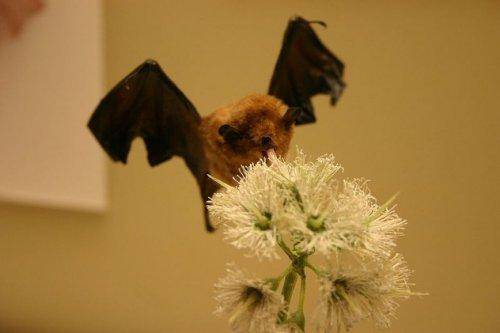 Топ-10: Удивительные способности летучих мышей, о которых вы не знали