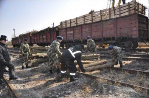 Пограничники пресекли контрабанду сигарет в брёвнах (11 фото)