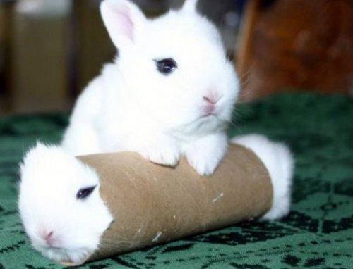 Животные внутри рулона из-под туалетной бумаги (10 фото)