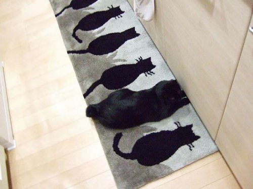 Кошачьи прятки (28 фото)