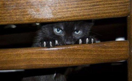 Кошки, готовые убить своих хозяев (25 фото)