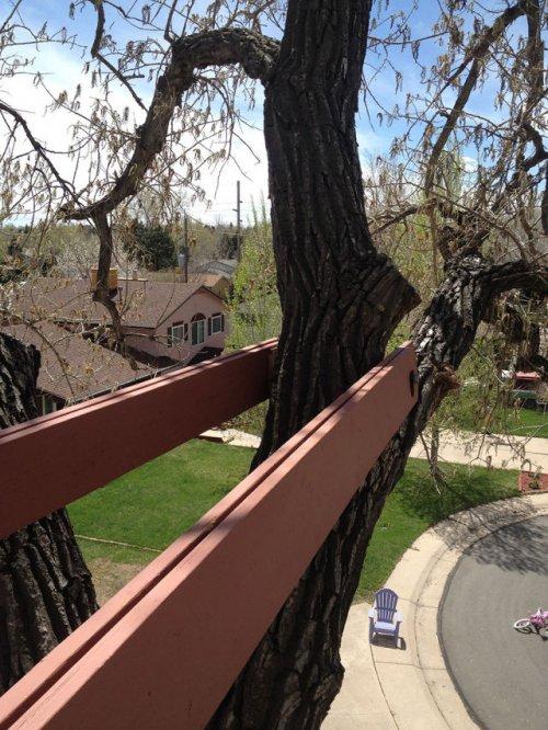Домик на дереве для любимой дочки (27 фото)