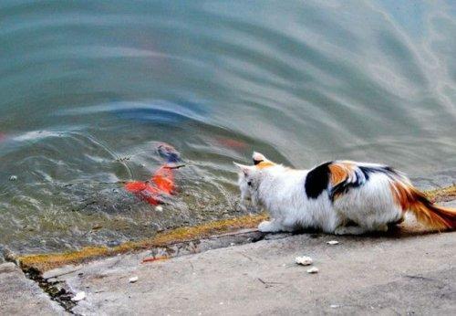 Голодная кошка поймала в пруду большую золотую рыбку (10 фото)