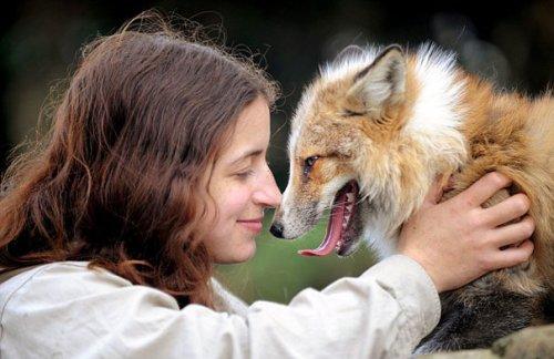 Спасённая лиса стала любимым домашним питомцем (8 фото + видео)