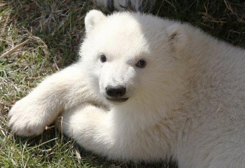 Мир животных в фотографиях (22 фото)