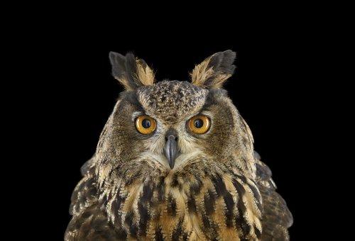 Мистические совы в фотопроекте Брэда Уилсона (18 фото)