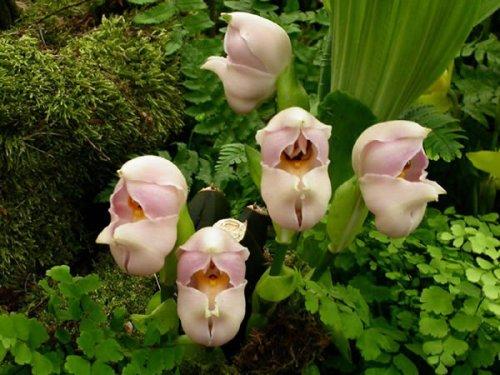 Топ-10: Самые необычные цветы в мире