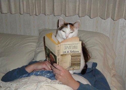 Кошки, которые мешают читать (31 фото)