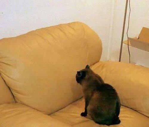 Забавные кошки (15 фото)