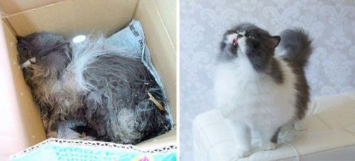 Кошки до и после спасения (30 фото)