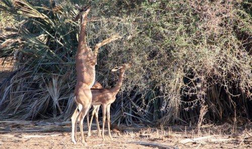 Топ-25: Самые удивительные примеры того, как животные приспосабливаются к окружающей среде