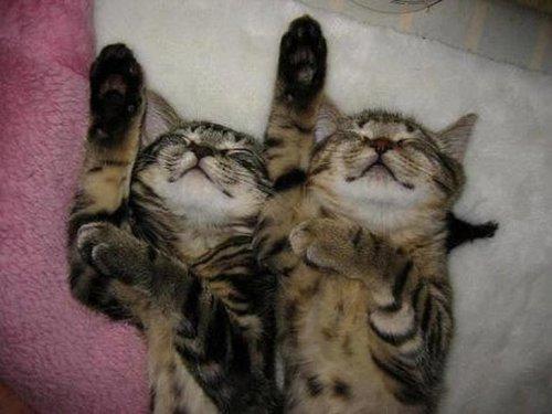 Коты, которые любят всё делать одновременно (20 фото)