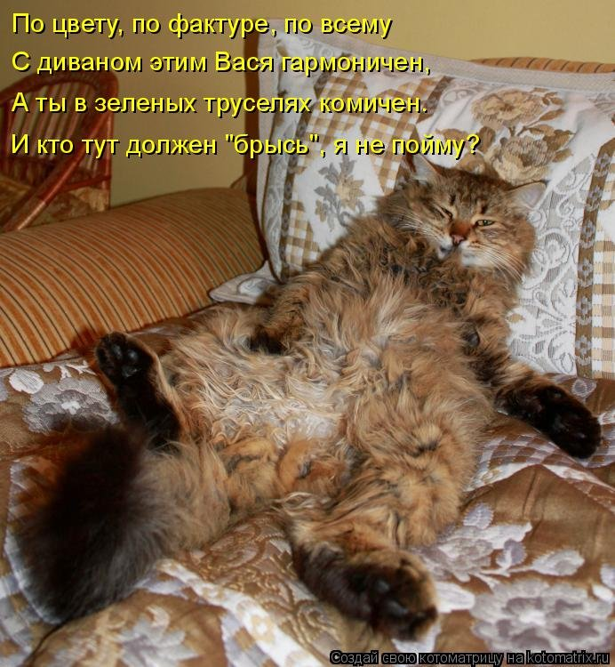 Смешные фото и картинки с кошками и надписями