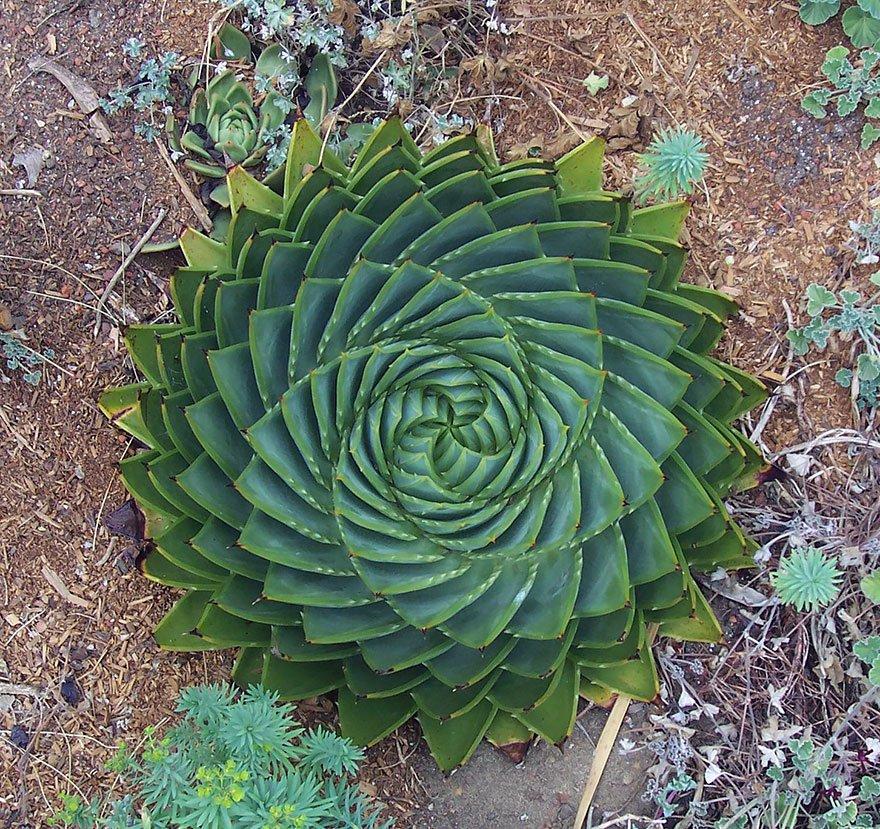 Картинки геометрии в природе
