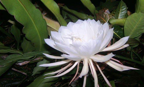 Редкие красивые цветы фото