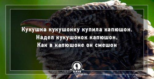 Скороговорки про животных (10 фото)