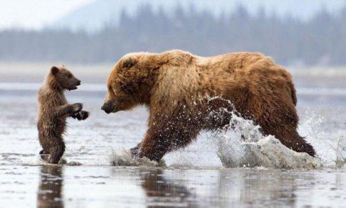 Медвежьи объятия в реальной жизни (7 фото)