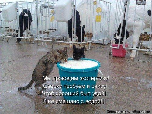 Свежая котоматрица на Бугаге (37 фото)
