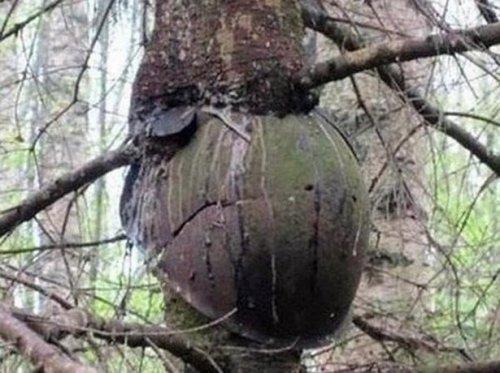 Шрамы войны в ленинградских лесах (10 фото)