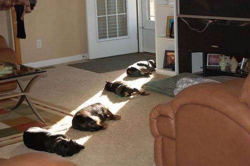 Домашние животные, которые любят тепло (37 фото)