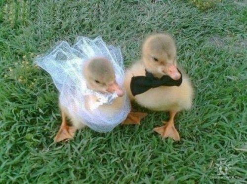 Прелестные животные в свадебных нарядах (18 фото)