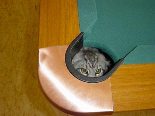 Кошачьи прятки (18 фото)
