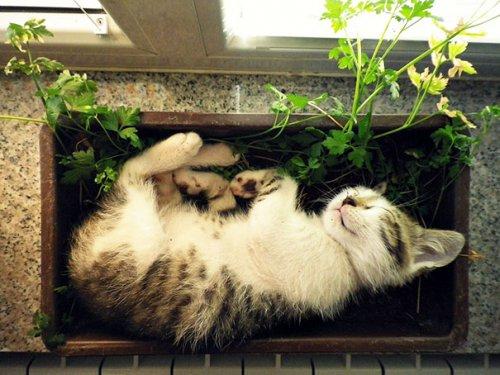 Кошки, которые решили стать цветами (35 фото)
