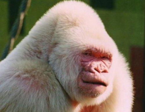 Животные-альбиносы (10 фото)