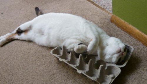 Кошки в коробках для яиц (10 фото)