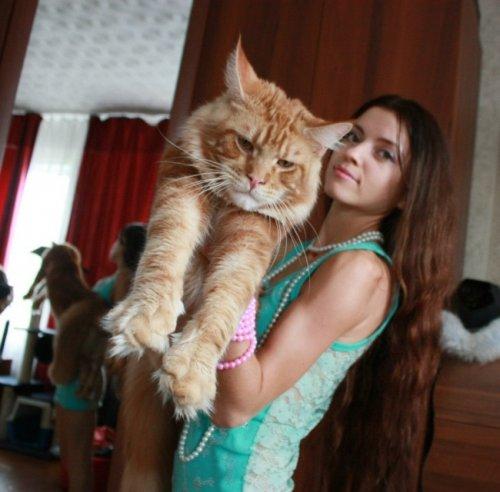 сайт кошки и их знакомые
