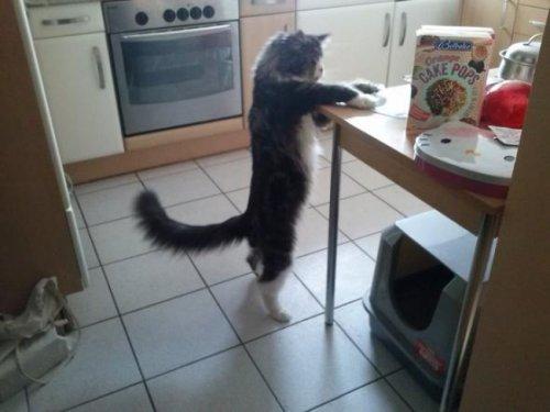 Большие кошки (15 фото)