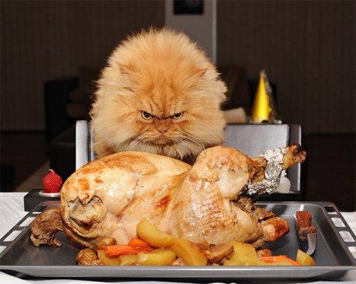 Взгляды животных, смотрящих на еду (18 фото)