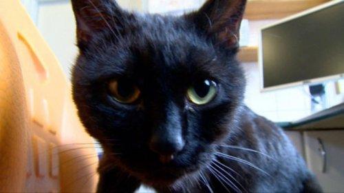 Кот-сиделка Радеменес, который помогает животным выздоравливать (10 фото)