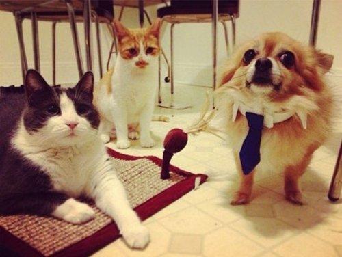 Впечатлительные собаки (21 фото)