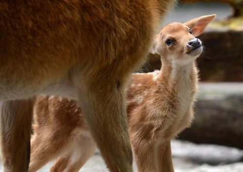 Очаровательные малыши из мира животных (36 фото)