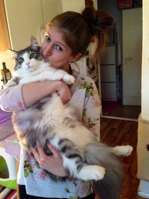 Большие кошки (23 фото)