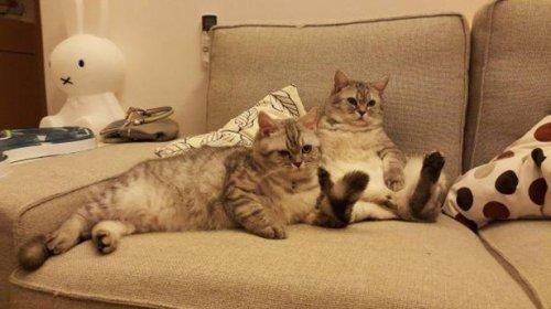 Фото-приколы с кошками (22 фото)