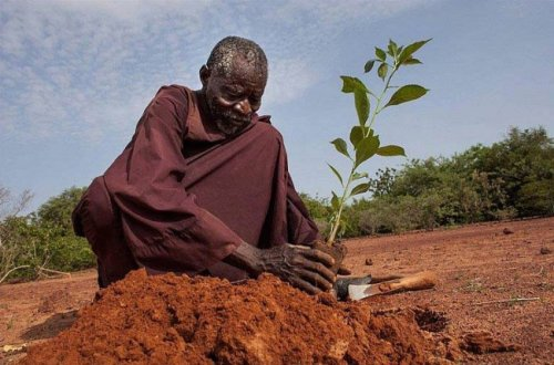 Якуба Савадого: человек, остановивший пустыню (4 фото + видео)