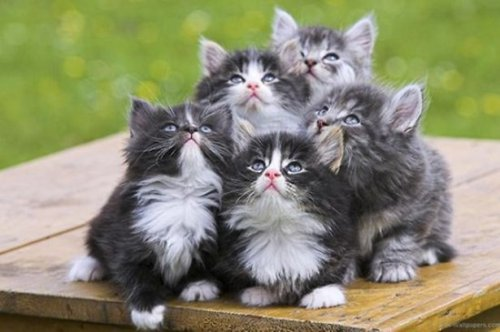 Фотоприколы с кошками (26 фото)