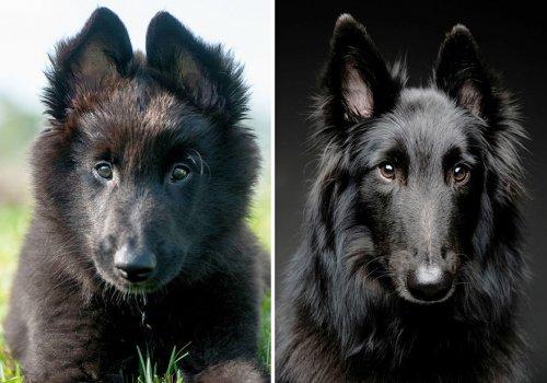 """Собаки в серии фотографий """"тогда и сейчас"""" (32 фото)"""